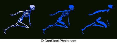 3d, concepto, de, humano, cuerpo masculino, y, esqueleto