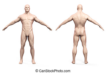3d, cuerpo humano, render
