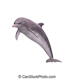 3D Dolphin - 3D Render of a Dolphin With Clipping Path over ...