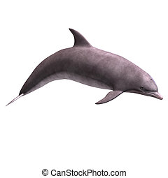 3D Dolphin - 3D Render of a Dolphin With Clipping Path over...