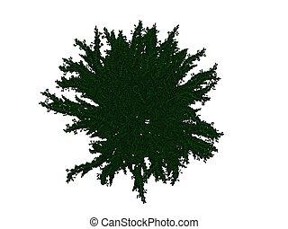 3d, fazendo, de, um, esboçado, pretas, bush, com, verde, bordas, isolado, branco, fundo