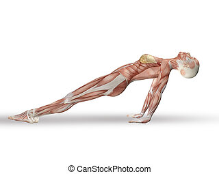 3D female figure with spine in yoga position