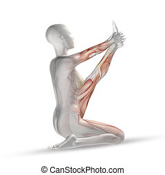 3D female medical figure with muscle map in yoga position -...