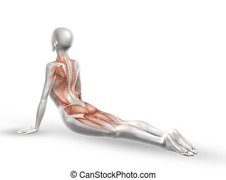 3D female medical figure with spine in yoga position - 3D...