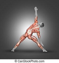 3d, figura masculina, em, pose triângulo