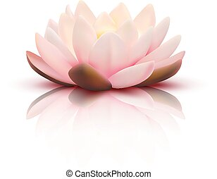 3D Flower Of Lotus
