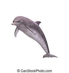 3d, golfinho