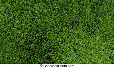3d green grass background texture.