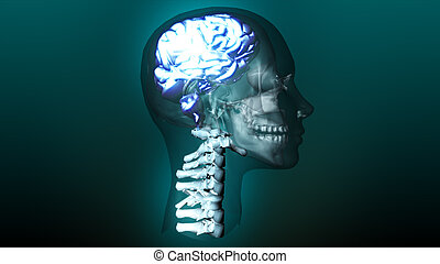 highly detailed animation of a human brain - 3d highly...