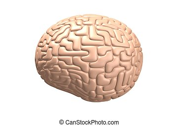 3D human brain isolated on white background