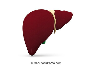 3d human liver in white background
