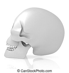 3D human skull on white background