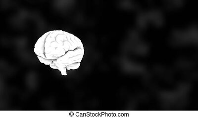 3D human white brain on black, science anatomy background, 3D rendering