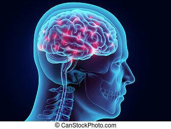 3D illustration brain nervous system active.