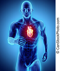 3d illustration - man running with heart x-ray and skeleton.
