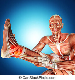 3d illustration of  a male anatomy . Ankle injury