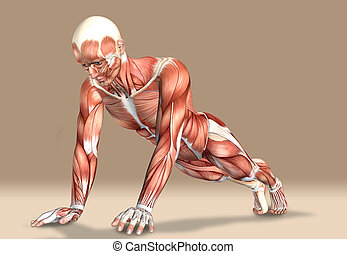 3d illustration of a medical male figure exercising