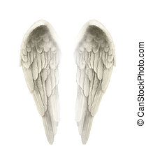 Isolated on white background, finely detailed symmetrical illustration of angel wings with a tinge of gold coloring