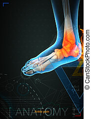 3d illustration of ankle pain by x- ray on background
