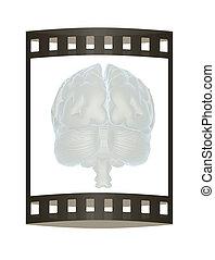 3D illustration of human brain. The film strip