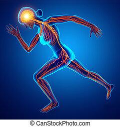 Human Nervous System - 3d Illustration of Human Nervous ...