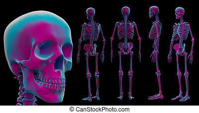 3d illustration of skeleton by X-rays on background