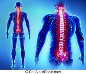 3D illustration of Spine, medical concept. - 3D illustration...