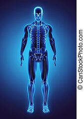 3D illustration Part of Human Skeleton, medical concept. -...