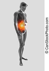 3d, ilustración, de, macho, sentimiento, el, stomachache