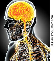 3d, ilustración, macho, nervioso, system.