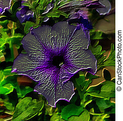 3D Image of a Petunia Flower