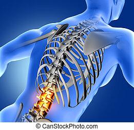 3d, médico, imagen, de, azul, médico, figura, con, más bajo, espina dorsal, destacado