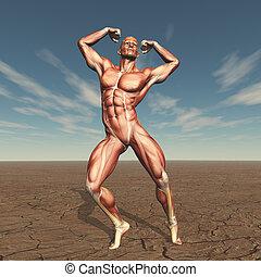 3D male body buildern with muscle map in barren landscape -...