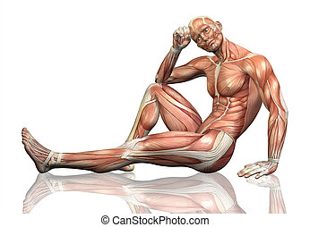 3D male figure sitting with detailed muscle map - 3D render...