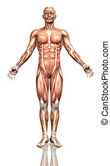 3D male figure with detailed muscle map - 3D render of a...