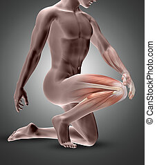 3D male figure with knee muscles highlighted