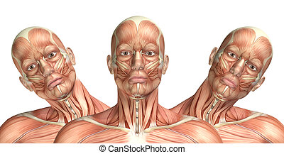 3D male medical figure showing cervical lateral bending - 3D...