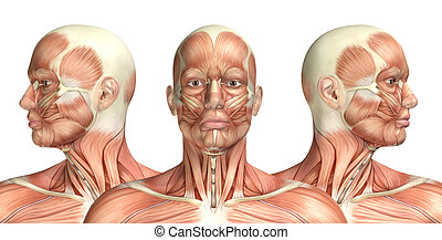 3D male medical figure showing cervical rotation - 3D render...