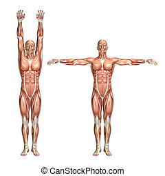 3D male medical figure showing shoulder abduction and...