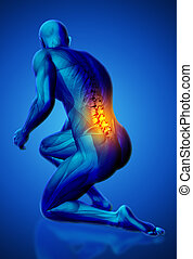 3D male medical figure with lower spine highlighted in kneeling position