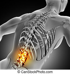 3D medical image of male with lower spine highlighted - 3D...