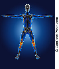 3D medical man with skeleton