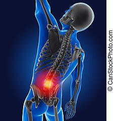 3d, medizinischer mann, mit, skelett