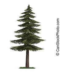 3D model of a fir tree isolated on white background