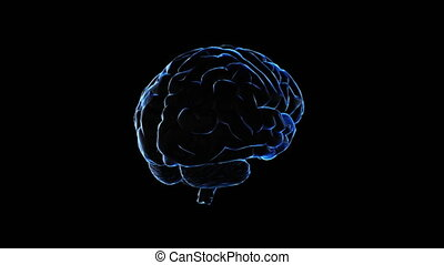 3D model of human brain