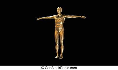 3d, model, van, man, lichaam, in, goud