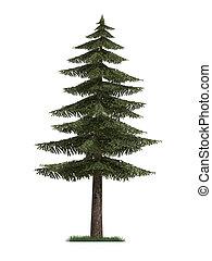 3d, modelo, de, árbol abeto