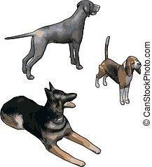 3D models of dogs, illustration, vector on white background.