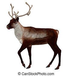 3d Reindeer - Digitally rendered illustration of a reindeer ...