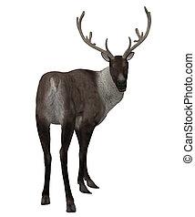 3d Reindeer - Digitally rendered illustration of a reindeer...